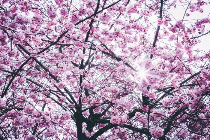 Digital Marketing Agency RFPs: April is High Season For a Reason